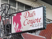 Dali Coyote Image